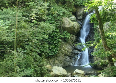 Fascinating detail of Water Streams and exuberant vegetation and boulders in high jungle rainy forest Henri Pittier National Park, Venezuela