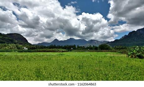 """Fascinating rice fields of Kanyakumari, Tamil nadu"""