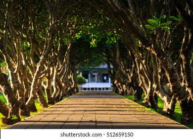 Fascinating walkway through the plumeria tunnel.