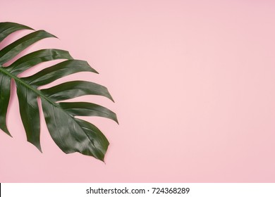Fashion background, Tropical palm leaf on pink background. Flat lay, top view.