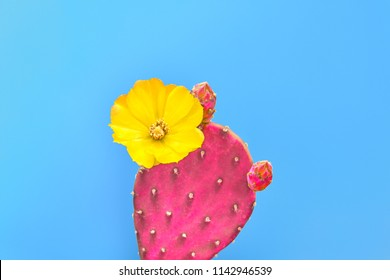 Fashion Cactus with flower on Trendy blue background, Minimal creative style. Fun Summer Sweet Mood. Tropical fashionable cacti plant. Creative concept. Surrealism