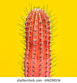 Fashion. Cactus pink colored on yellow background. Minimalism. Contemporary Art gallery Style. Creative concept. Trendy tropical fashionable cacti plant, bright color. Surrealism