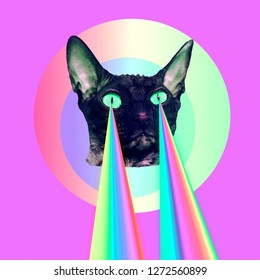 Fashion cat with rainbow lasers from eyes. Minimal collage funny art