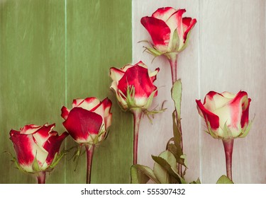 Fashion color trends Spring Summer 2017 - Greenery: Fragility and strength concept. Five burgundy red and white Olympiada roses competing in wooden running tracks - Congratulation card