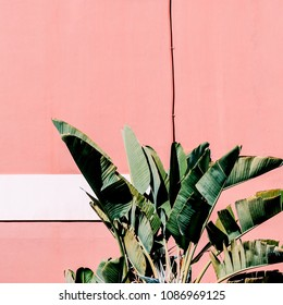 Fashion content. Plant on pink.  Tropical green mood
