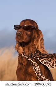 Fashion dog - funny dog with sunglasses and scarf