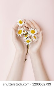 Fashion hand art chamomile natural cosmetics women, white beautiful chamomile flowers hand with bright contrast makeup, hand care. Creative beauty photo girl sitting at table, contrasting background