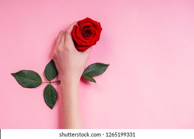 Fashion hand natural cosmetics women, Red Rose beautiful chamomile flowers leaves and thorns hand hand care. Valentine's Day arm girl studio shot pink background.bud of virginity innocence