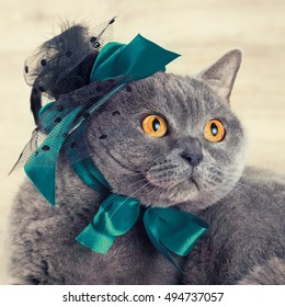 Fashion Portrait Of Cat Wearing Hat With Blue Ribbons Looking Up And Dreaming