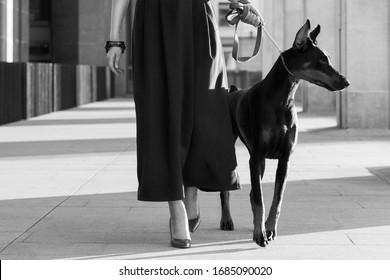 fashion shooting of stylish pretty blond model with dog doberman