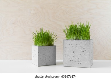 Fashionable concrete pots with green grass on a table indoors