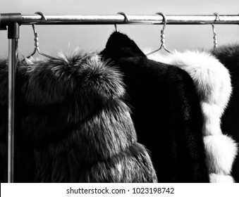 fashionable luxurious waist coats of fur hanging on rack on golden hangers on red studio background