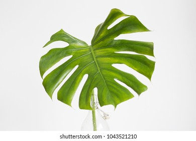 Fashionable plant in a glass vase. Monstera palm leaf in white room.