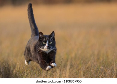 Fast cat running across the field