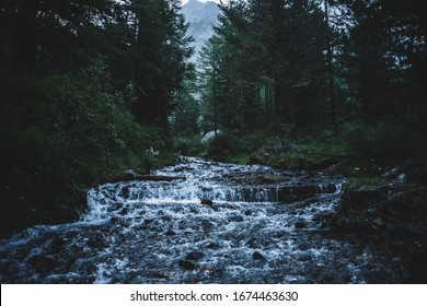 Fast mountain creek flows in dark forest. Cascade stream in backwoods among dense thickets and coniferous trees. Big stone near small river. Woodland scenery of virgin nature in dusk. Gloomy landscape