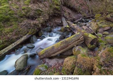 Fast stream deep in the wild wood. Fallen trees.