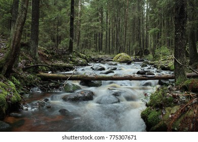 fast white river in a gloomy coniferous forest long exposure