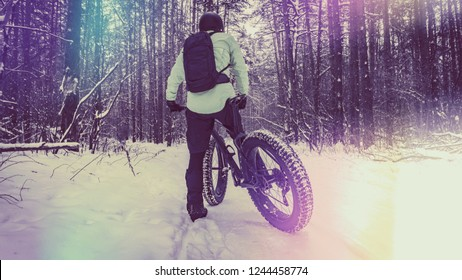 Fat bike also called fat bike or fat-tire bike - Cycling on large wheels in the winter forest. artistically colored and toned photo