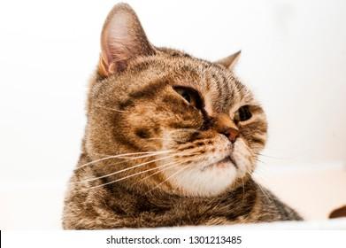 Fat cat portrait
