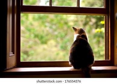 A fat cat sitting on a window sill looking outside.