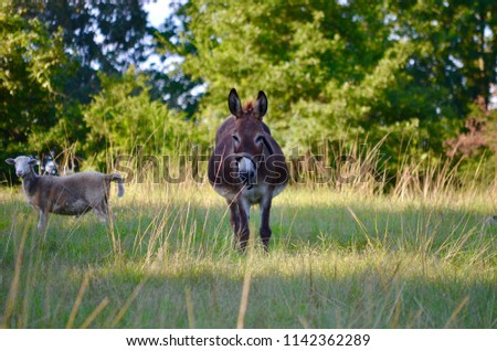 fat donkey pasture stock photo edit now 1142362289 shutterstock