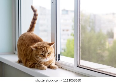 fat ginger striped cat on a white window sill looking out the window