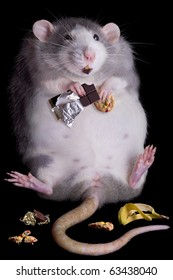 A fat rat named Drucilla is eating candy and cookies.