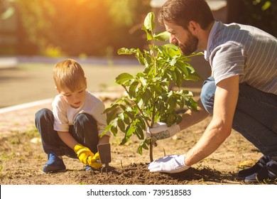 The father and a boy plant a tree