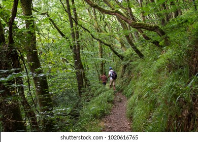 Father and child walking along a path in a deep forest, Devon, England, UK.