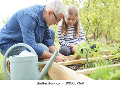 Father and daughter gardening together, home vegetable garden