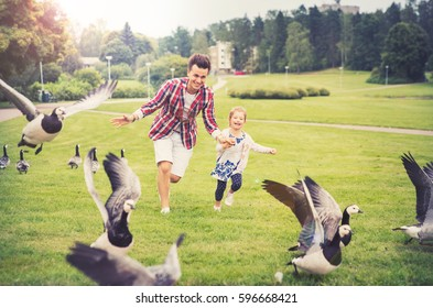 Father and daughter having fun in summer day. Chasing Canadian geese, running on the meadow and laughing. Healthy lifestyle. Helsinki, Finland