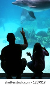 father and daughter watching dolphins