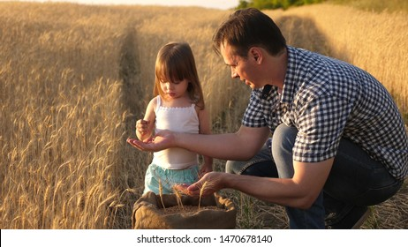 father farmer plays with little son, daughter in field. grain of wheat in hands of child. Dad is an agronomist and small child is playing with grain in bag on a wheat field. Agriculture concept.