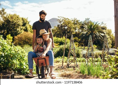 Father gives mother and daughter ride in wheelbarrow at farm. Happy family with man giving woman and little girl ride in wheelbarrow outdoors.