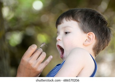 Father gives son grasshopper to eat.  Food of the future. Little boy was afraid of a grasshopper
