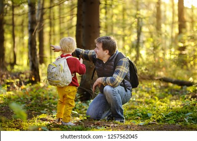 Father and his little son walking during the hiking activities in forest at sunset. Family leisure time