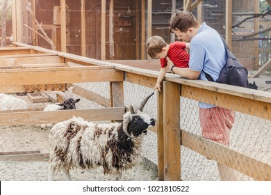 Father holding his toddler son while touching the horn of the goat at the zoo or animal farm. Outdoor fun for kids