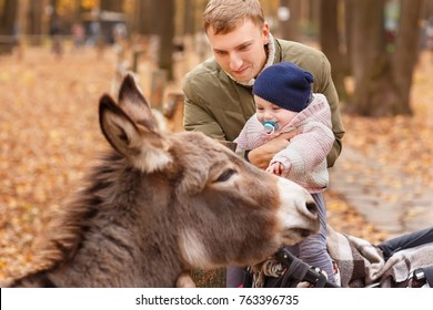 father with little daughter in contact zoo. Dad holding baby girl. Happy child stroking donkey in autumn park