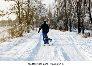 father pulls the child on a sleigh in the snow, on the road among the trees
