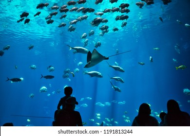 Father and son along with other unidentifiable silhouettes admiring fish and rays in a giant, blue water aquarium