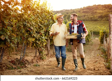 father and son celebrating harvesting grapes in vineyard