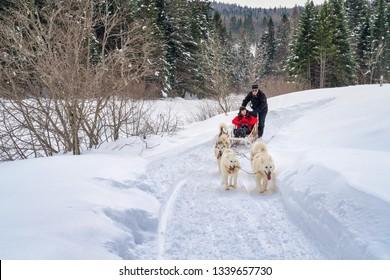 Father and son dog sledding