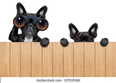 father and son dogs spying behind wood fence