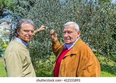 father and son, Elderly man and middle-aged man together in the garden, taking olive leaves