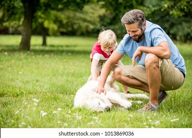 Father and son pet Retriever dog in summer in their garden
