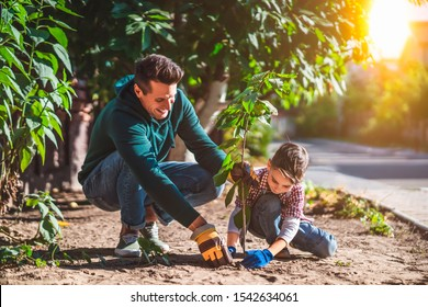 The father and son planting a tree