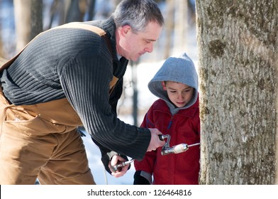father and son use a hand drill to tap a maple tree