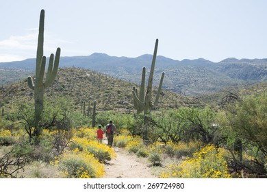 Father and son walking along the blooming Sonoran Desert in Saguaro National Park, Arizona, USA