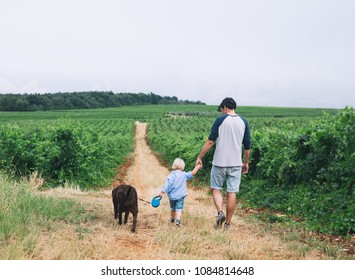 Father and son walking with dog on nature, outdoors. Family background. Dad and his kid walking on trail among field and vineyards.