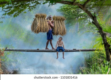 father and son,farmer threshing paddy rice,Asian farmer Carrying the paddy After harvest Walk across the wooden bridge with have his son sitting on the bridge.